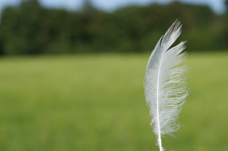 feather-517181_1920
